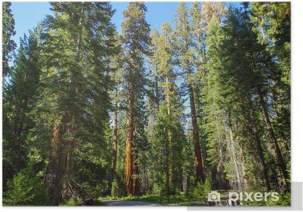 Plakat Park Narodowy Yosemite - Giants Sequoia - Ameryka
