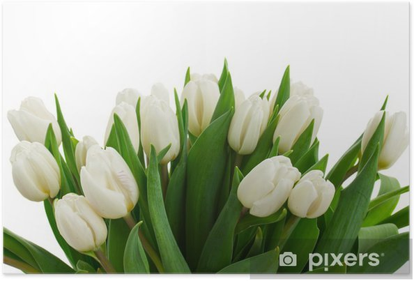 Plakát Parta bílých tulipánů zavřít - Květiny