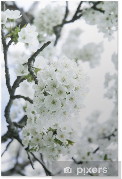 Plakat Pastelowych kolorach wiosny kwiat makro - Tematy