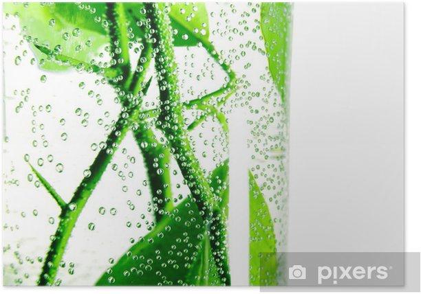 Plakat Pęcherzyki powietrza na gałęzi drzewa cytrynowego w szklance wody - Drzewa
