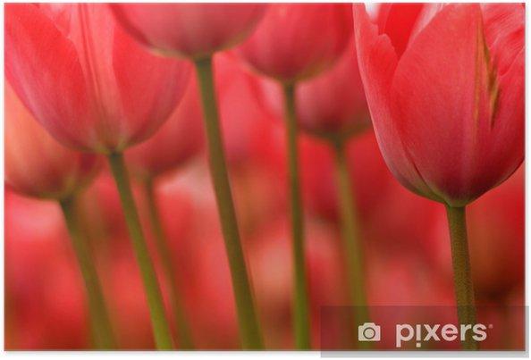 Plakat Pędy i kwiaty - Tematy