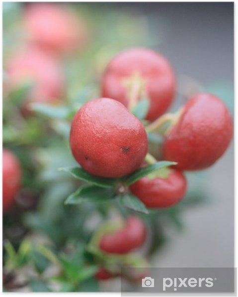 Plakát Pernettya mucronate - Rostliny