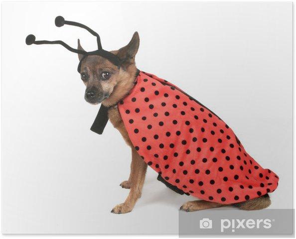 Plakát Pes převlečený za beruškou - Savci