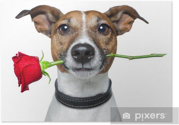 Plakát Pes s rudou růží - Nálepka na stěny