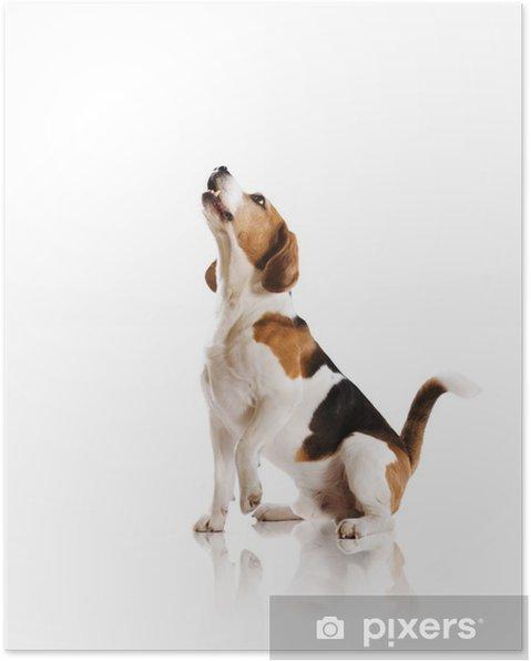 c8553eb2f5a Plakát Pes ve studiu • Pixers® • Žijeme pro změnu