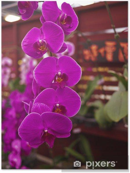 Plakát Phalaenopsis Orchidaceae - Květiny