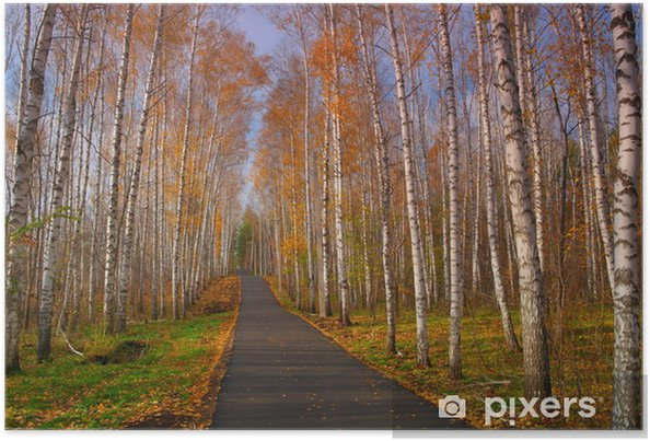 Plakat Piękna jesień krajobraz - Lasy