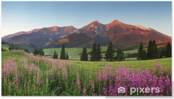 Plakat Piękna panorama górskich kwiatów - Słowacja - Tematy