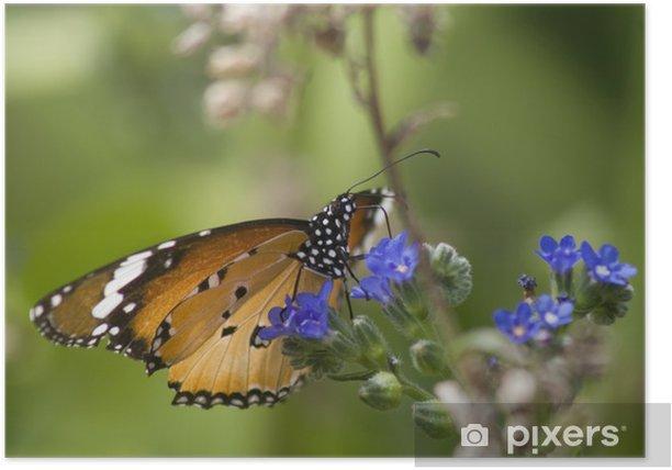 Plakat Piękne butterfloy monarcha na niebieski kwiat - Tematy