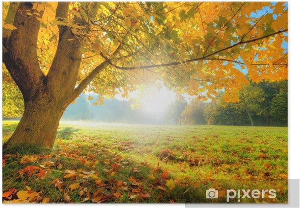 Plakat Piękne drzewa jesienią z opadłych liści suchych - Przeznaczenia