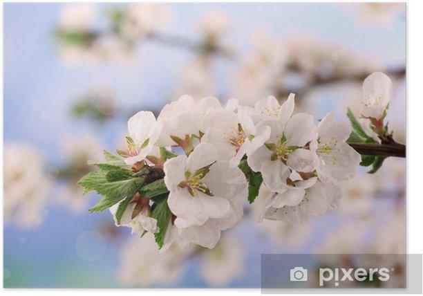 Plakat Piękne kwitnące gałęzie, zbliżenie, na jasnym tle - Kwiaty