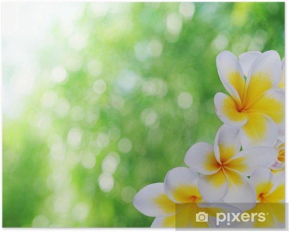 Plakat Piękne naturalne bokeh i frangipani - Kwiaty