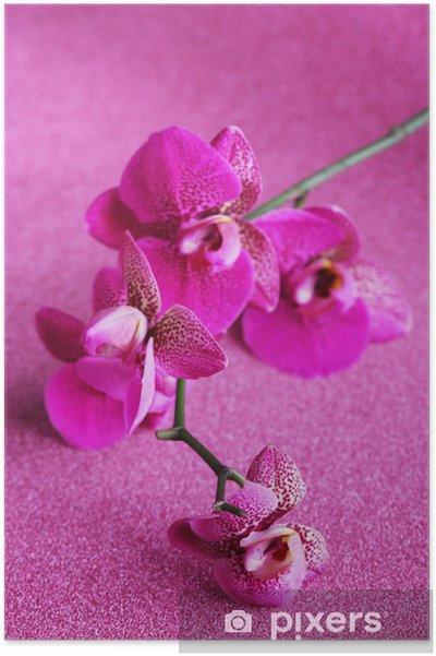 Plakat Piękne orchidea na fioletowym tle - Kwiaty