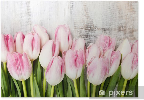 Plakat Piękne różowe i białe tulipany na tle drewnianych. Kopiowanie miejsca - Tematy