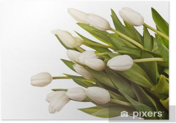 Plakat Piękne tulipany - Kwiaty