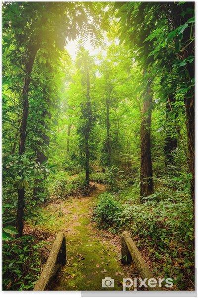 Plakat Piękno lasów tropikalnych. tropikalna różnorodność botaniczna i wysoka wilgotność. - Krajobrazy