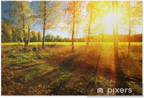 Plakat Piękny krajobraz z lasu letnich i słońca - Tematy