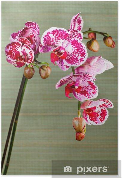 Plakat Piękny kwiat orchidei - Tematy