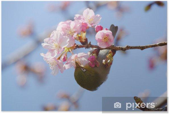 Plakat Pierwszy Dzień Wiosny Samusakura Kwiatów I Białym Oczu