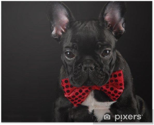Plakat Pies ma na sobie czerwony Bowtie - Buldogi francuskie