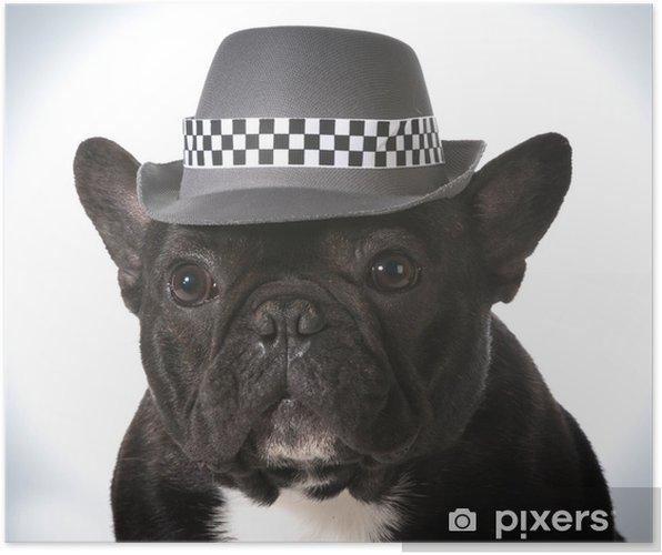 Plakat Pies ma na sobie kapelusz - Buldogi francuskie