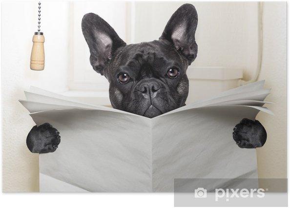 Plakat Pies WC - Buldogi francuskie