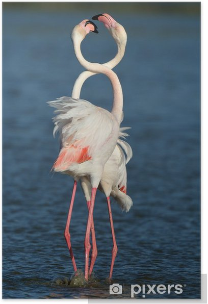 Plakat Pink Flamingo - Tematy