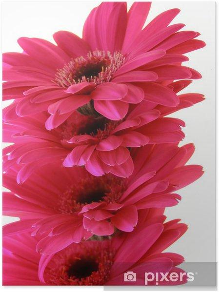 Plakat Pink Gerbera - Kwiaty
