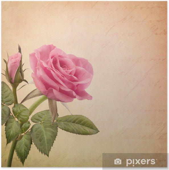 Plakat Pink Rose - Tematy