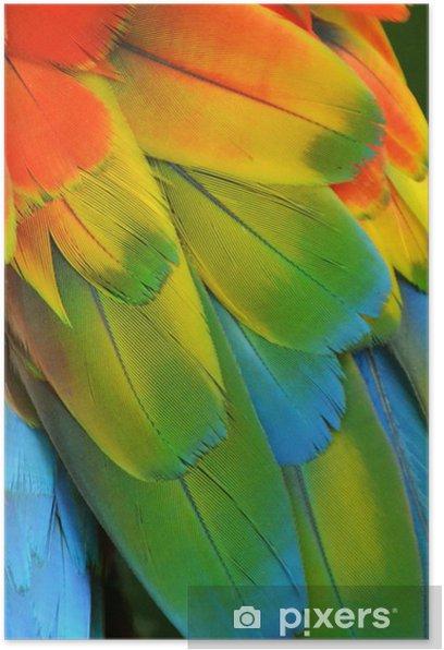 Plakat Pióra ara (Rainbow) - Ptaki