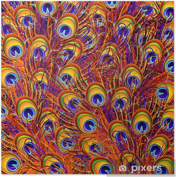 Plakat Piume Pavone Sfondo-Peacock Feathers Background-Vector - Cuda natury