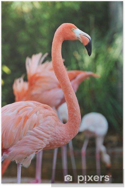 Plakát Plaměňák - Ptáci