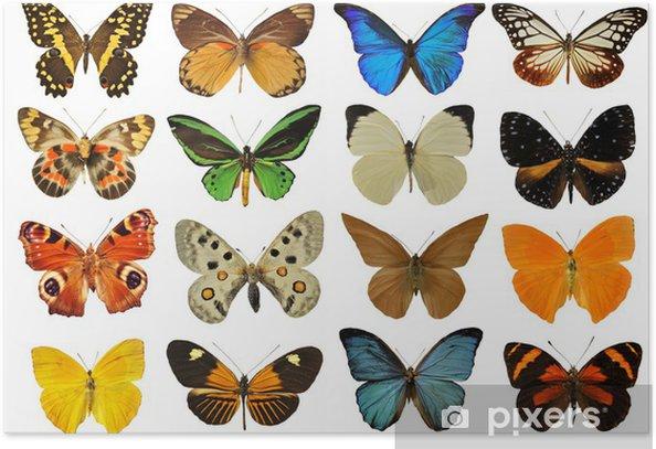 Plakat Planszowe motyle - Inne Inne
