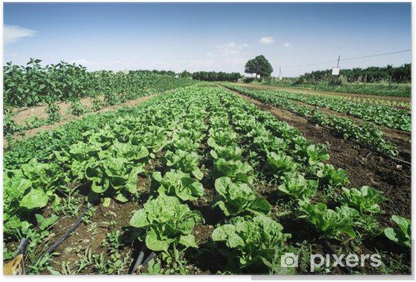 Plakát Plantáže se salátem - Zemědělství