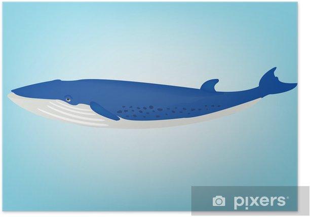 Plakat Płetwal błękitny - Inne Inne