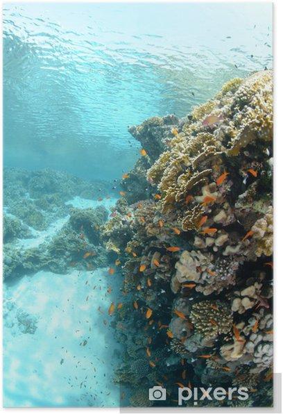 Plakat Płytkie tropikalne rafy w piaszczystej lagunie - Sporty wodne