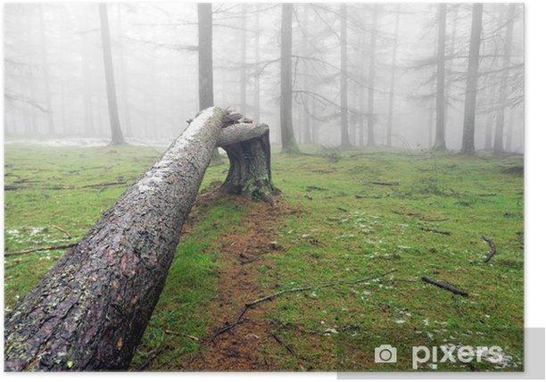 Plakat Pnia drzewa spadł - Lasy