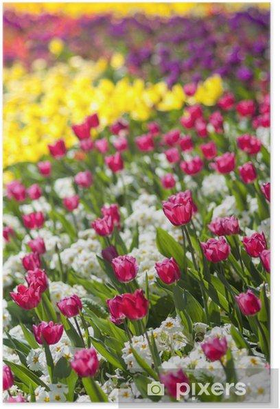 Plakát Podrobnosti o záhonu v perspektivě s malou hloubkou ostrosti. - Květiny