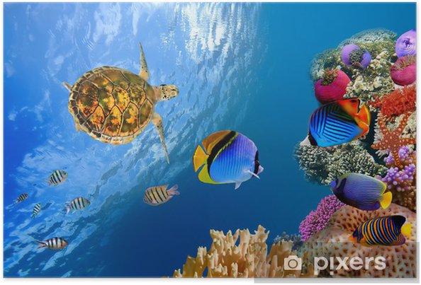 Plakát Podvodní krajina s několika Butterflyfishes a želvy - Ryby