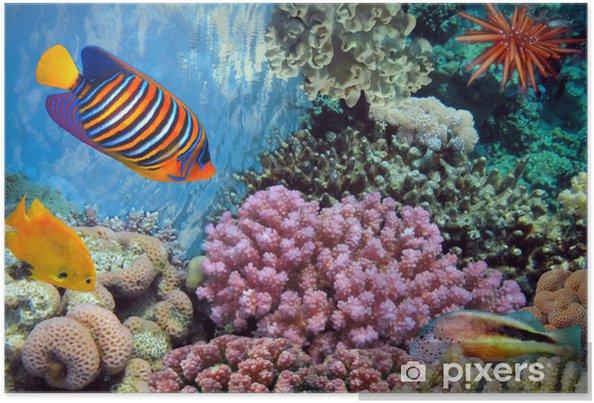Plakat Podwodny strzelać żywe rafy koralowej z ryb - Tematy