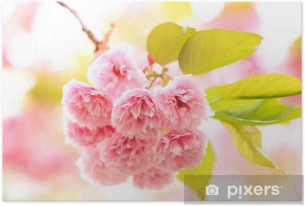 Plakat Podwójne kwiaty wiśniowego - Kwiaty