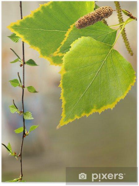 Plakát Podzimní listí na podzim - Roční období