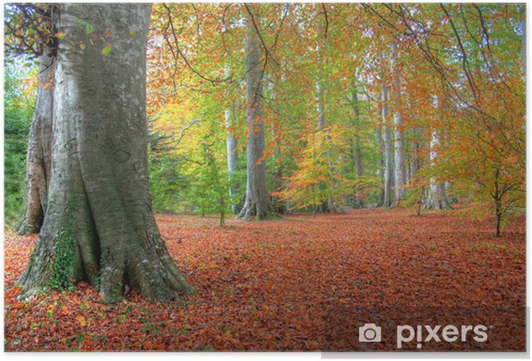 Plakát Podzimní listí v Powerscourt - Lesy