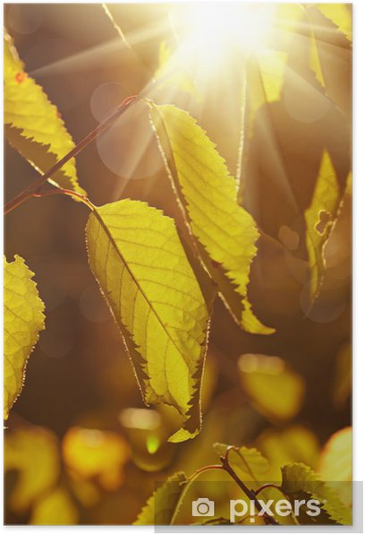 Plakát Podzimní strom větev - Ekologie