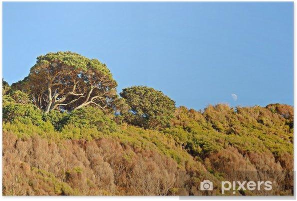 Plakát Pohutukawa Strom v zimě - Stromy