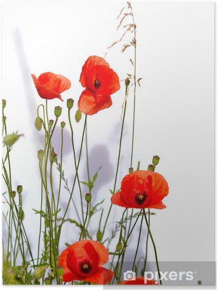 Plakat Pojedyncze czerwone maki - Kwiaty