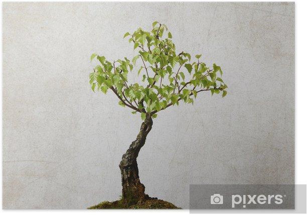 Plakat Pojedyncze drzewa na tle zrujnowanego - Pory roku