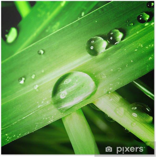 Plakát Pokles na trávě - Rostliny