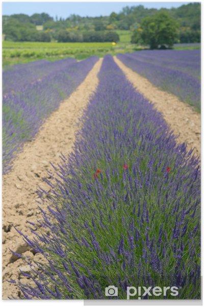 Plakat Pola lawendy we Francji - Krajobraz wiejski