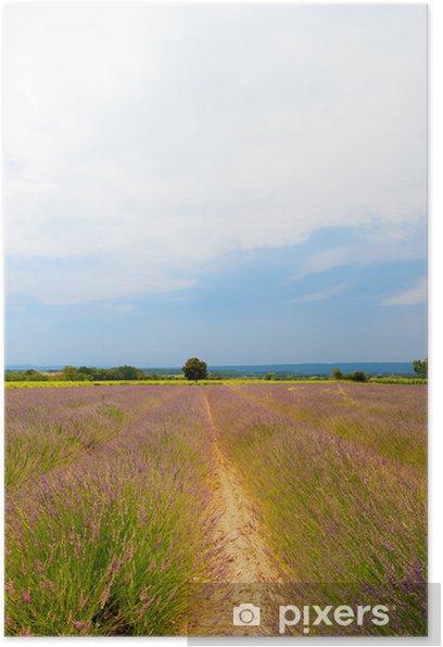 Plakat Pola lawendy - Krajobraz wiejski
